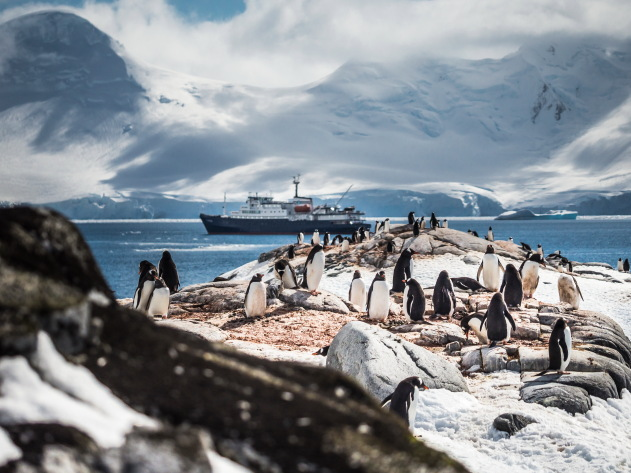 Penguin Colonies of Antartica