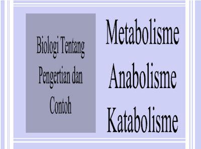 Pengertian Metabolisme, Anabolisme dan Katabolisme Disertai Contoh