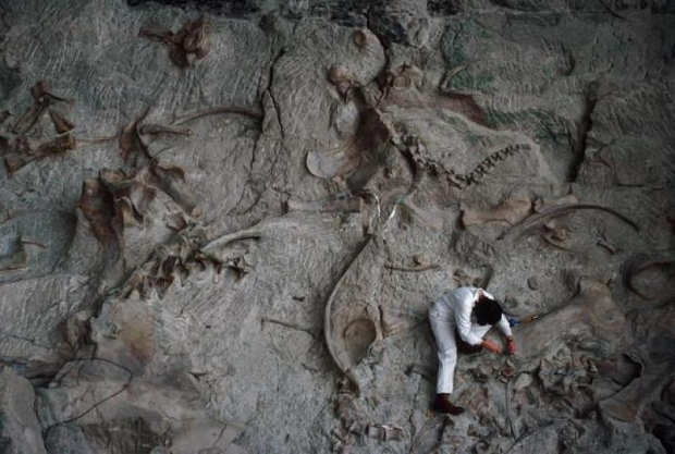 Monster Misterius Ditemukan Dalam Bentuk Fosil di Amerika
