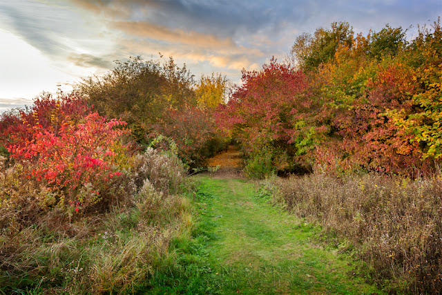 Hinchingbrooke Country Park in full autumn colour under vibrant clouds