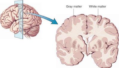 मस्तिष्क की संरचना एवं कार्य