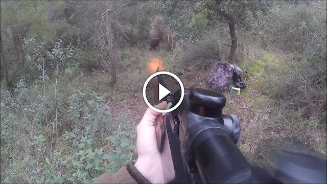 collection des vidéo de tirs des sangliers