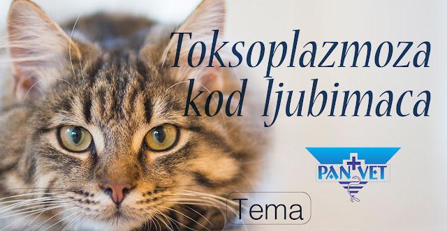 Toksoplazmoza kod ljubimaca, Panvet Subotica