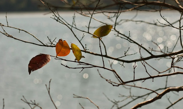 Hanoi in young leaf season 4