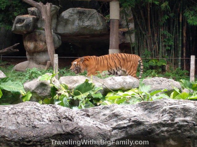 Visiting Chiang Mai Zoo with a Big Family