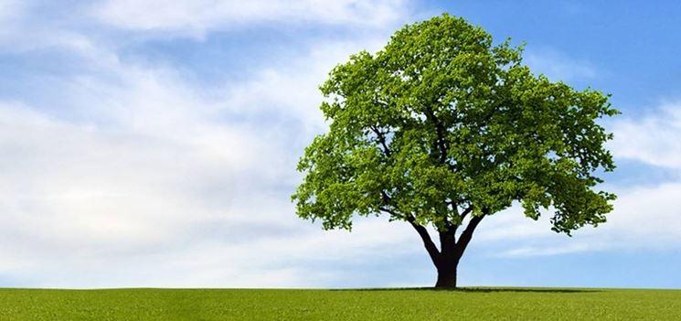 Arte con la prof alberi - Migliori alberi da giardino ...