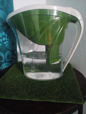 Get Clean Water Pitcher Shaklee