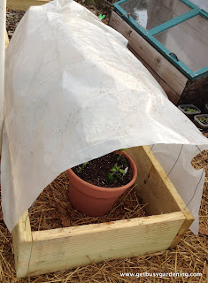 Plastic over wire frame to make cold frame