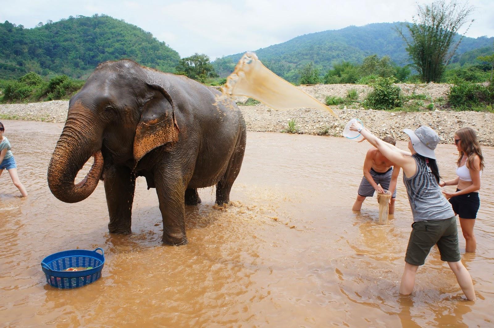 """Chiang Mai - You use tiny buckets to """"bathe"""" the elephants"""