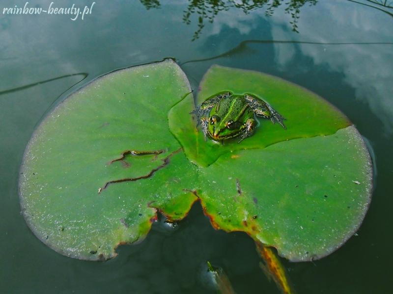 oczko-wodne-w-ogrodzie
