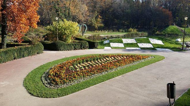 bradina-botanica-flori