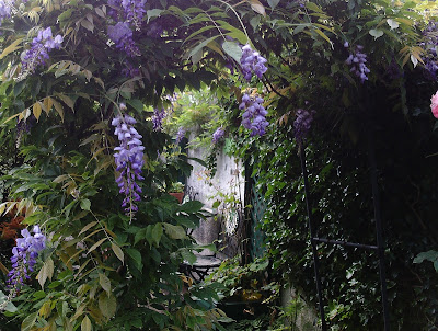 wisteria garden review of 2017 Green Fingered Blog