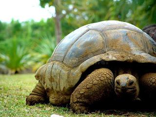 Rüyada kaplumbağa
