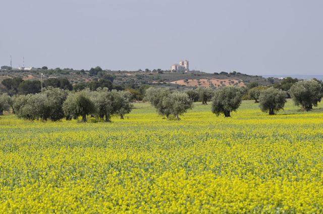 Primavera en los campos de   Campo Real
