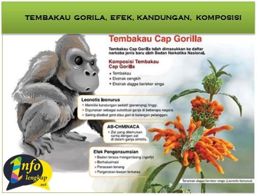 Tembakau Gorila 2017 – Efek, Harga, Pohon, Kandungan