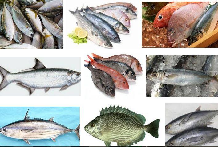 88 Cara Membuat Gambar Hewan Laut Gratis Terbaru