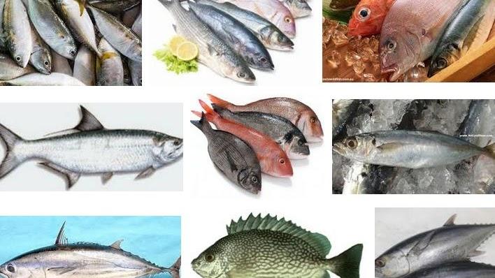 Ikan Laut Konsumsi Berikut Nama Dan Gambarnya