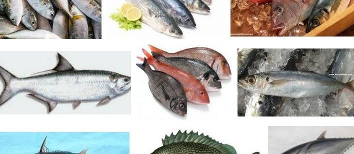 Ikan Laut Konsumsi? Berikut Nama dan Gambarnya