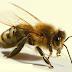 النحلة الكسول - قصص اطفال
