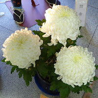 ひらかた菊フェスティバル 菊