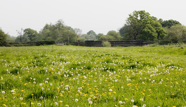 View across fields to the Enfield Road bridge over the River Medway, Leigh, 12 May 2016.