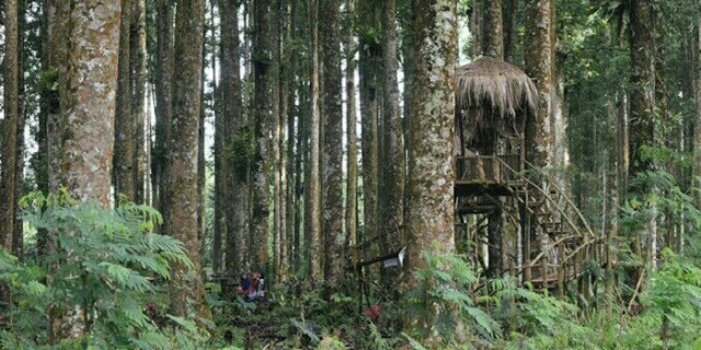 Kampung Kurcaci Purbalingga mirip rumah Hobbit.