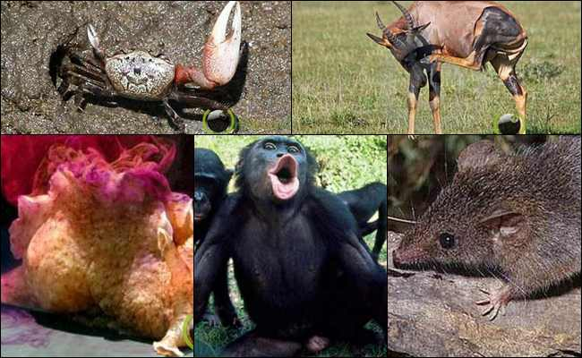 8 Hewan yang memiliki Penyimpangan Seksual