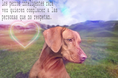 imajenes de perro, imagenes de perros con mensajes, imagenes sobre perros, perritos imagenes, imagenes de perritos lindos