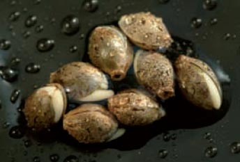Zip 420 Tips For Buying Cannabis Seeds Online