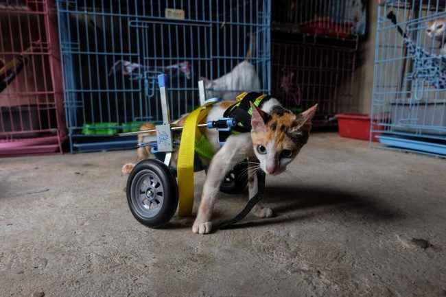 Γυναίκα φροντίζει σπίτι της 158 ανάπηρες γατούλες που βρήκε σε δρόμους της Ινδονησίας (βίντεο)