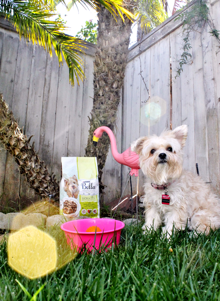 10 Habits of Highly Loved Pets #PurinaMysteries #AD