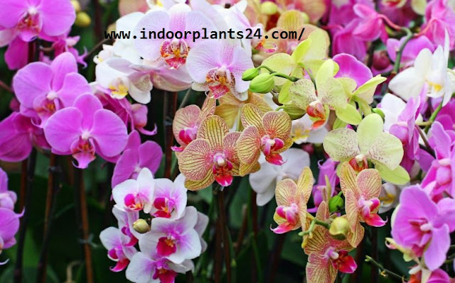 Beautiful orchid flowers images