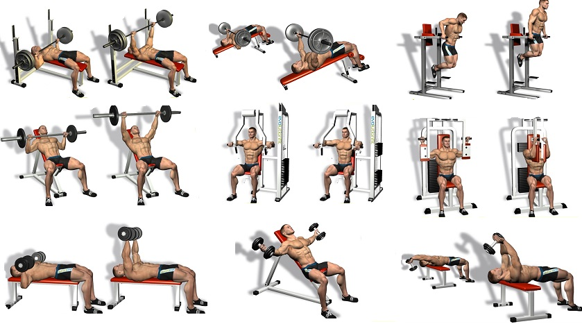 list of gym exercises pdf