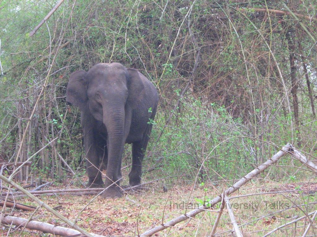 Indian Biodiversity Talks: Poaching major reason for ...