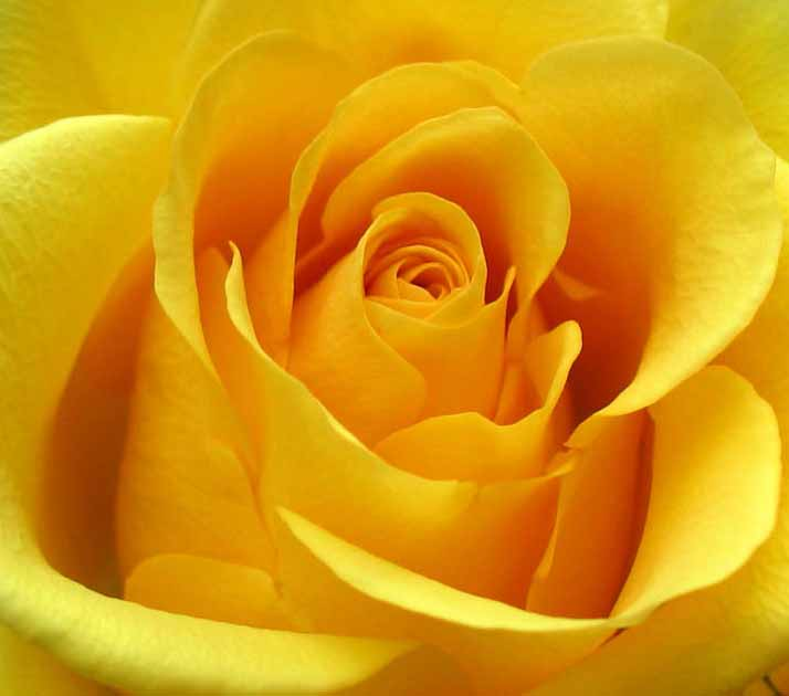 1e143b8a4de0 oldstitches  Το κίτρινο χρώμα και οι συμβολισμοί του