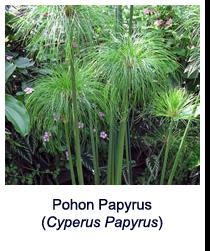 papyrus-www.healthnote25.com