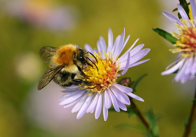 Beyond Passing Time: Protect the bees from pesticides in