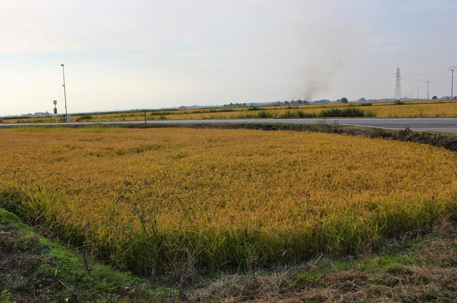 Fertilizzanti non veleni