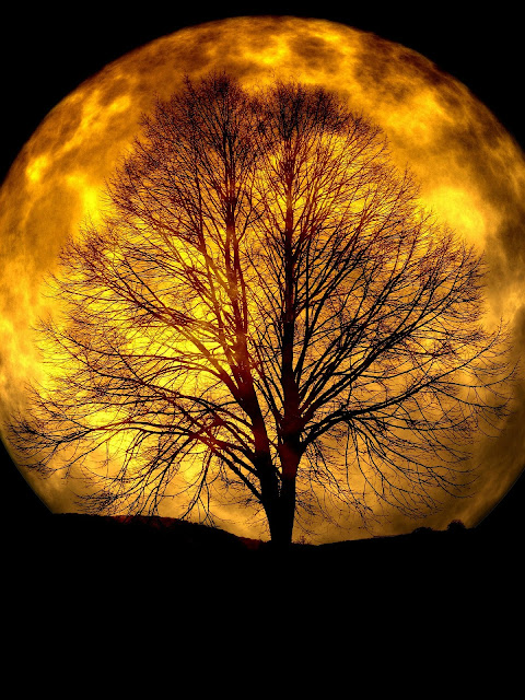 Ay ve ağaç