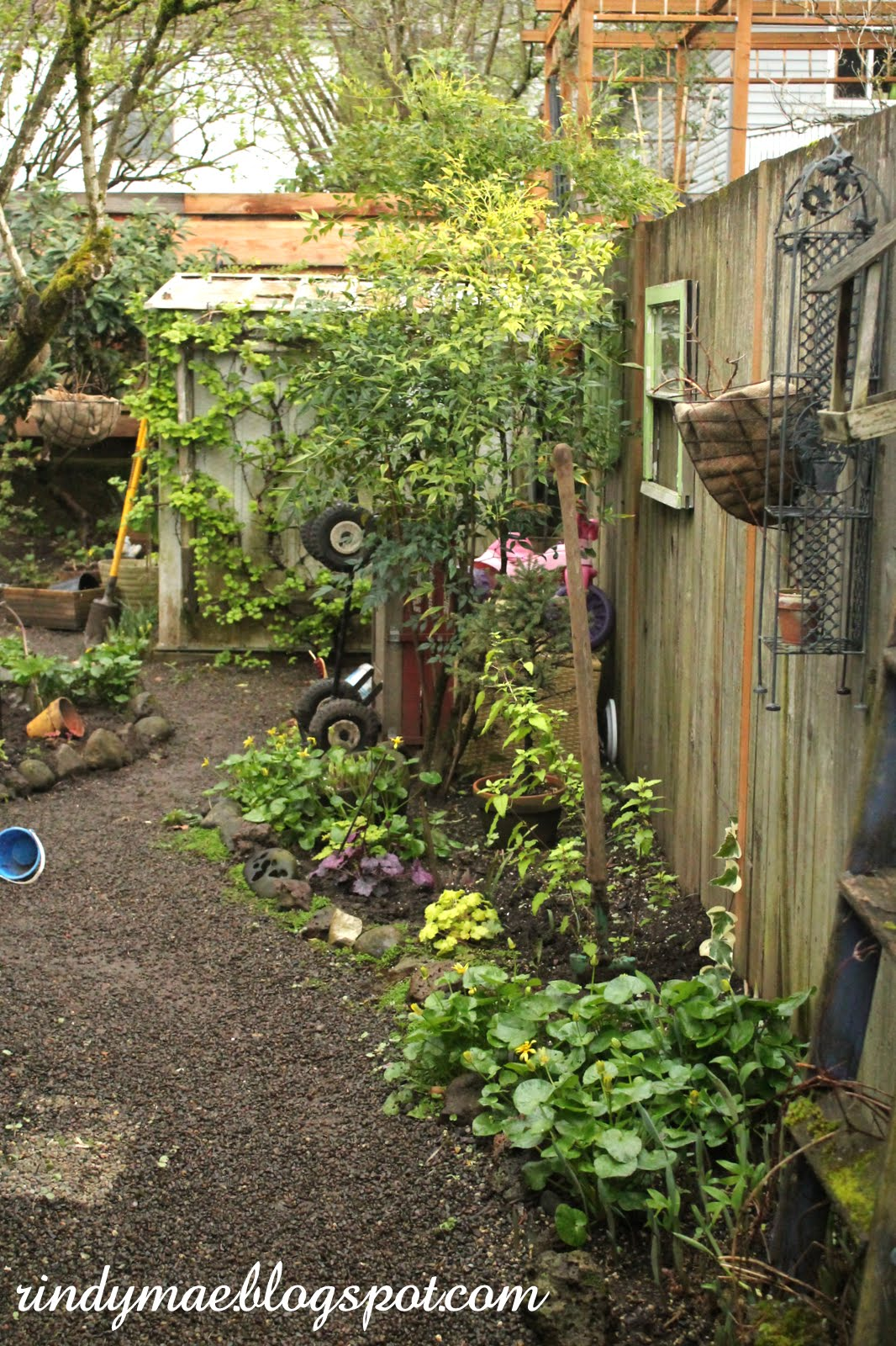 rindy mae the backyard 3 20 16