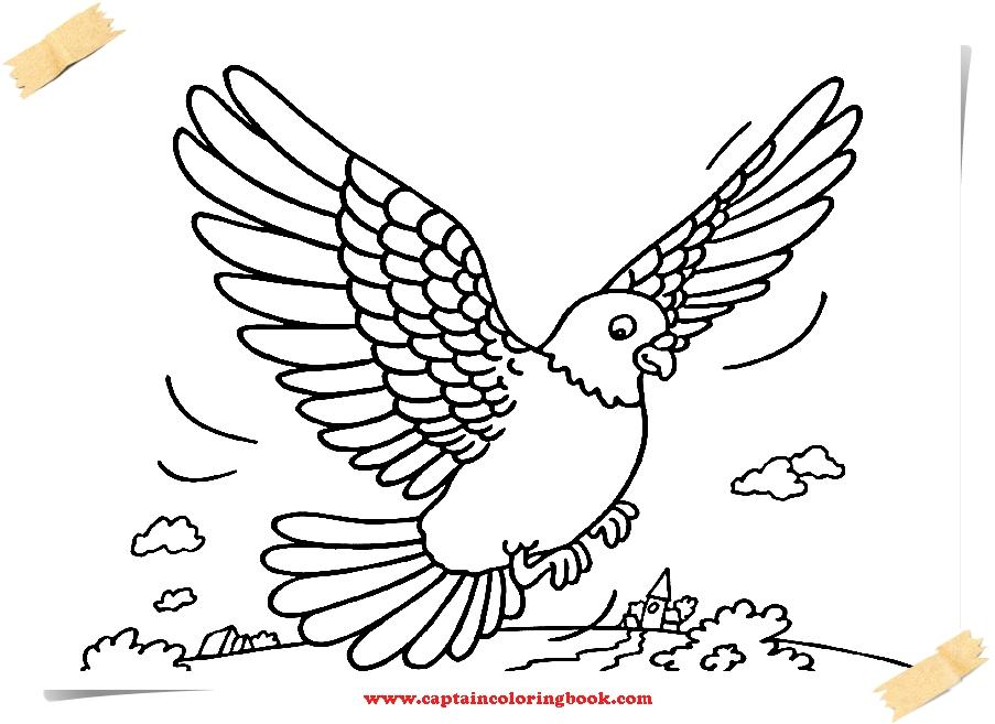 Pigeon coloring pages printable