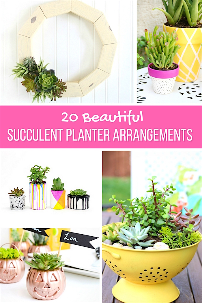 20 Beautiful Succulent Planter Arrangements