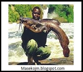 Cara Mudah Budidaya Ikan Lele Menguntungkan