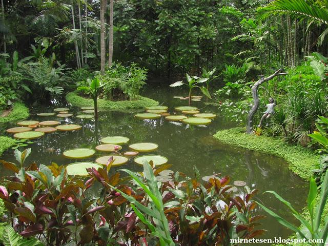 Ботанический сад Сингапура - имбирный сад