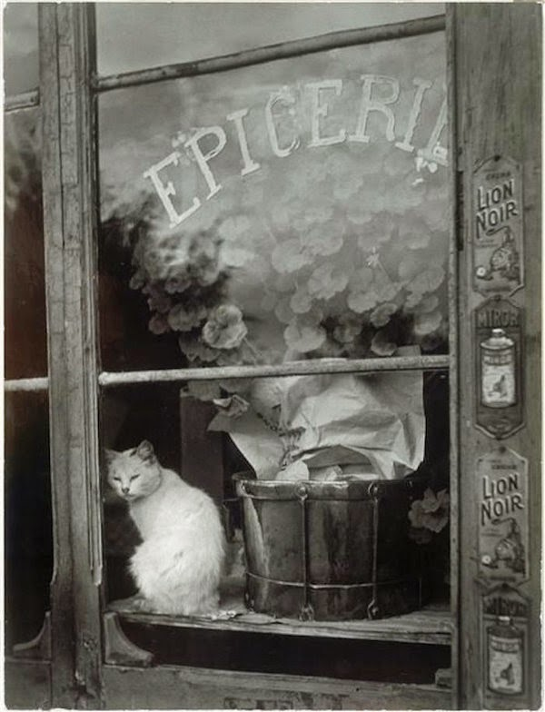 chat paris epicerie