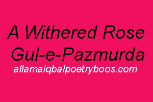 A Withered Rose - Allama Iqbal Poem In English