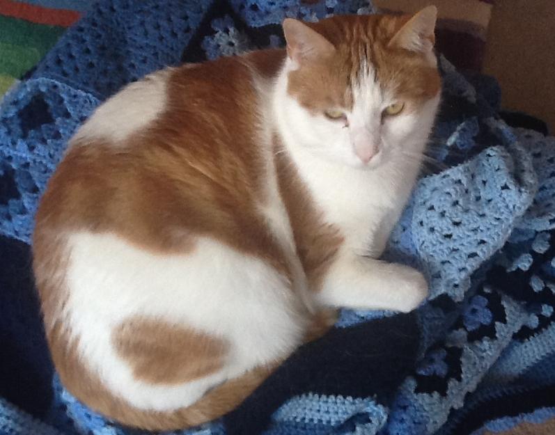 Redfearn the cat on blue crochet blanket || www.embellishedelephant.blogspot.co.uk