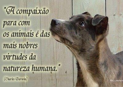 Compaixão para com os animais