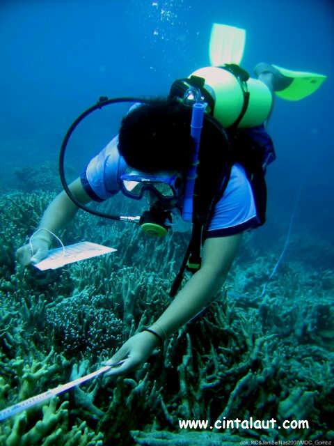 gambar penyelam ilmiah mengapung melakukan pendataan karang