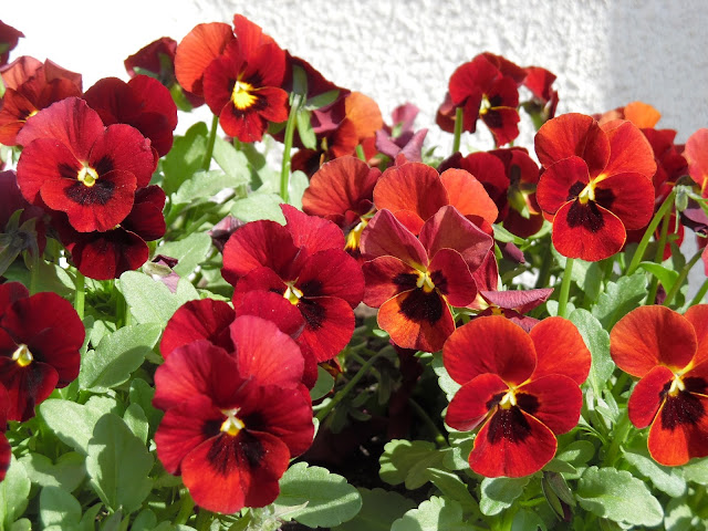 kwiaty wiosenne